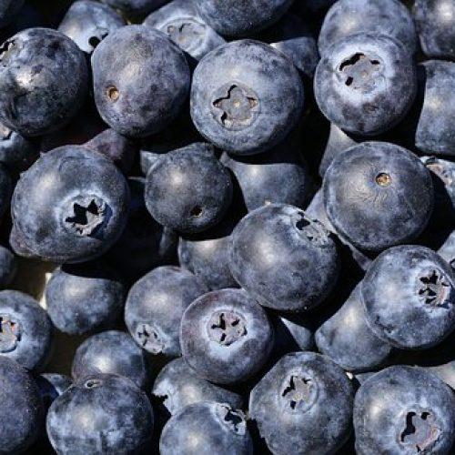 blueberries-4333033__340